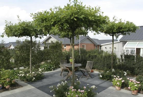 Gårdhavemiljø tegnet af Arne Thomsen tlf. 21 72 44 62