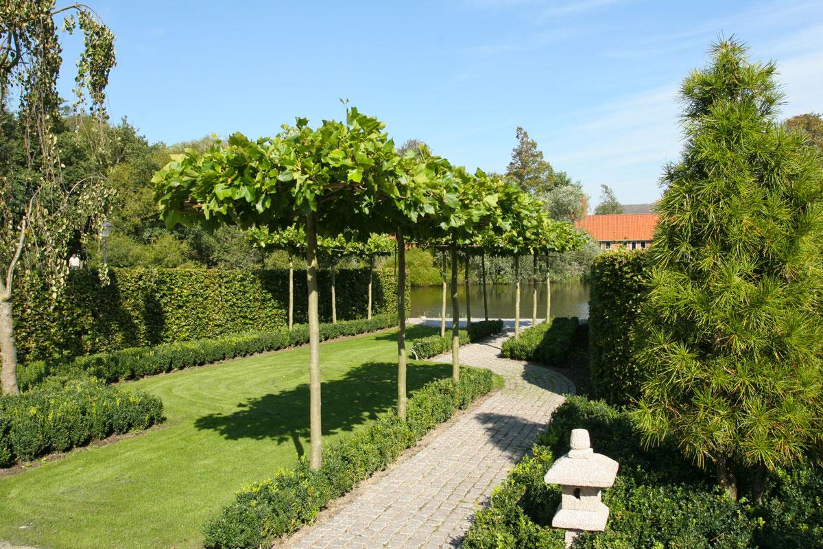 Tagudbunden-platantræer-danner-en-grøn-pergola